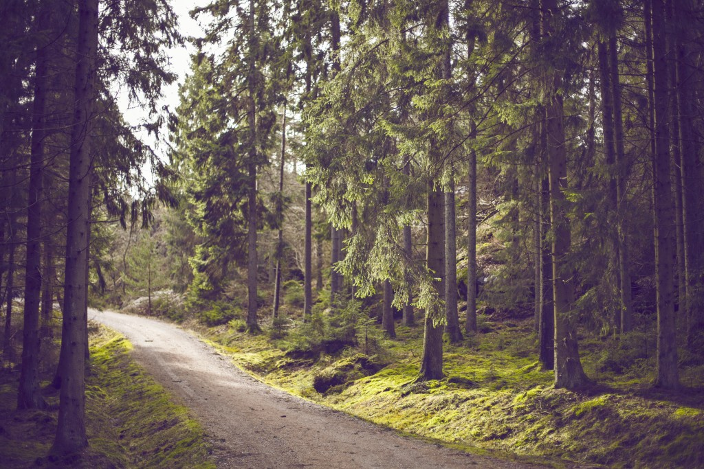 wood-nature-forest-trees