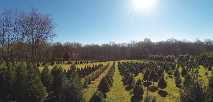 Up the Road: Christmas Tree Farms